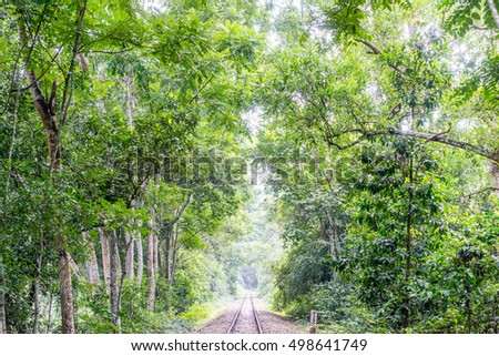 beautiful green forest in summer at sylhet, bangladesh