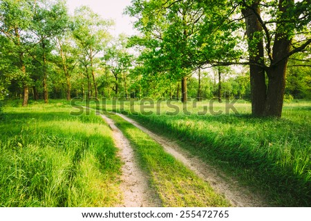 Beautiful green forest in summer. Old oak tree and dirty road, path, way, lane in countryside - stock photo
