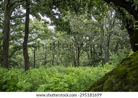beautiful green forest. Mexico, mountain landscape. - stock photo