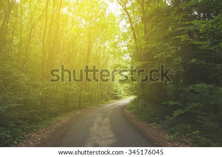 beautiful green forest with vintage filter - stock photo