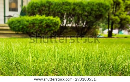 Beautiful green full grass in home yard - stock photo