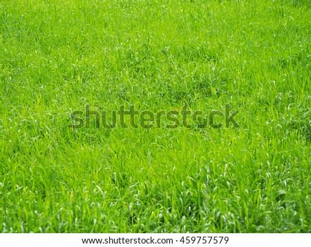 Beautiful green grass after rain - stock photo