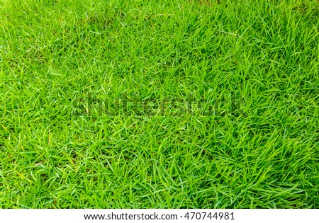 Beautiful green grass area front yard garden.