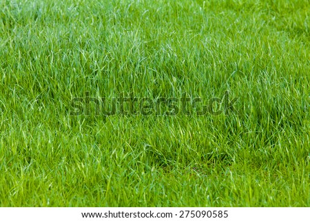Beautiful green grass. Grass background. Green grass texture - stock photo