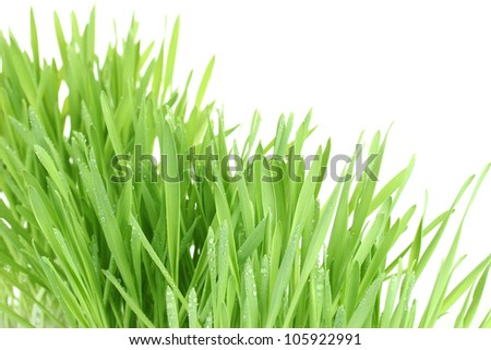 beautiful green grass isolted on white - stock photo