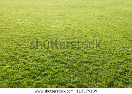 Beautiful green grass of the football field. - stock photo