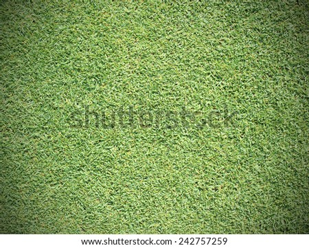 Beautiful green grass texture from golf course. - stock photo
