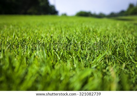 Beautiful green grass texture on golf court - stock photo