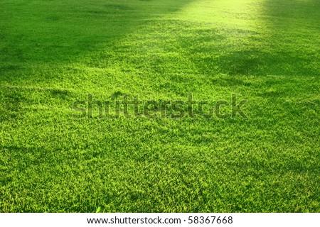 Beautiful green lawn - stock photo