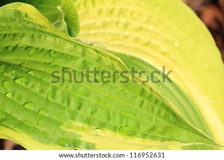 Beautiful green leaf outdoor nature macro