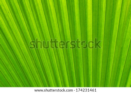 Beautiful green leaf patterned background