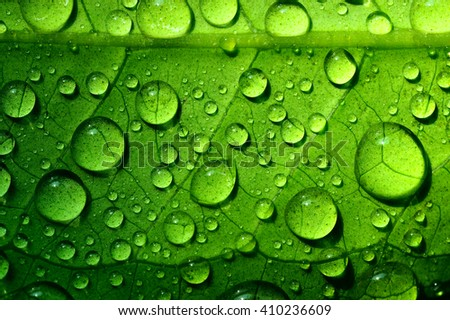 Beautiful green leaf texture with drops of water - stock photo