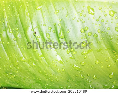 Beautiful green leaf with drops of water