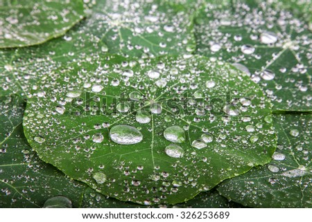 Beautiful green leaf with drops of water. Nature background - stock photo
