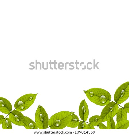 Beautiful green leafs with drops of water - stock photo