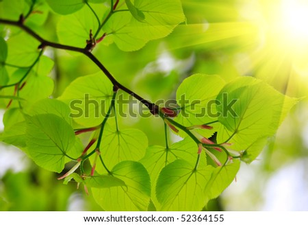 Beautiful green leaves - stock photo