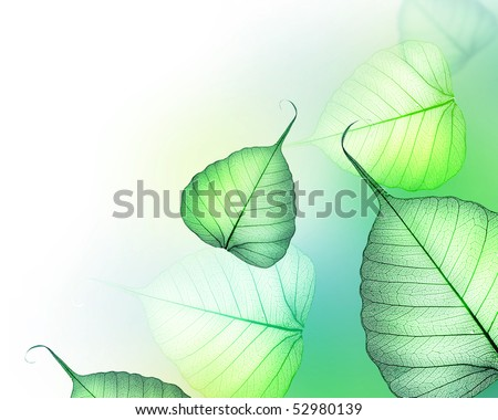 Beautiful Green leaves border.Floral Design - stock photo