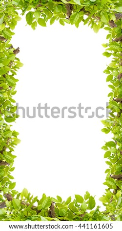 Beautiful Green leaves frame on white background  - stock photo