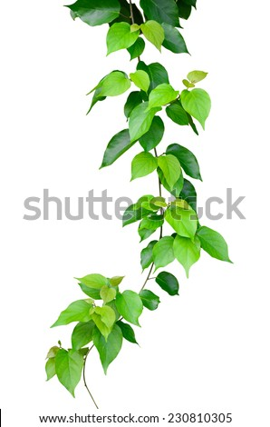 Beautiful Green leaves isolated on white background - stock photo