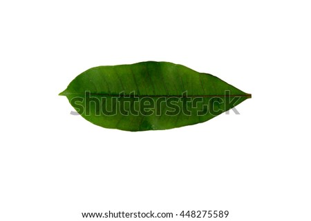 Beautiful green leaves on a white background for print and background