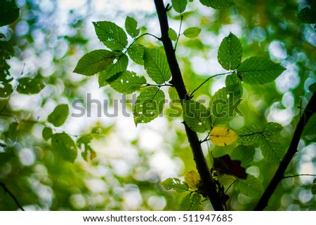 Beautiful green leaves on the green backgrounds. Fresh and green leaves