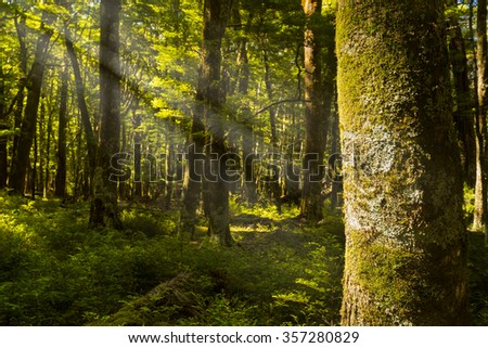 beautiful green lush forest