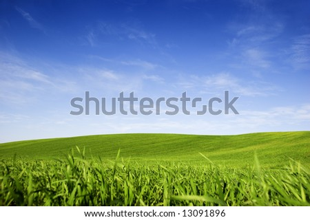 Beautiful green meadow with a bright blue sky - stock photo