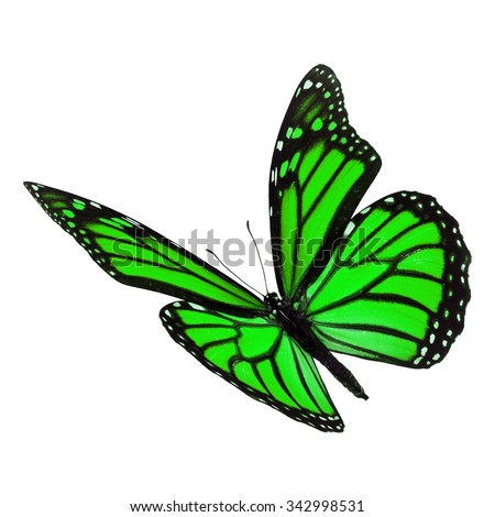 Beautiful green monarch butterfly flying isolated on white background