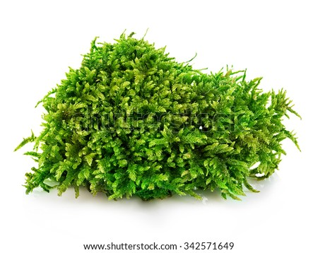 Beautiful green moss close-up isolated on a white background. - stock photo