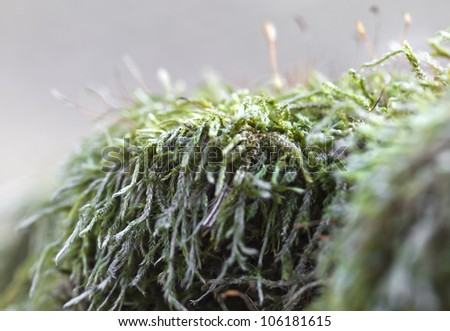 Beautiful green moss details, in back-light - stock photo