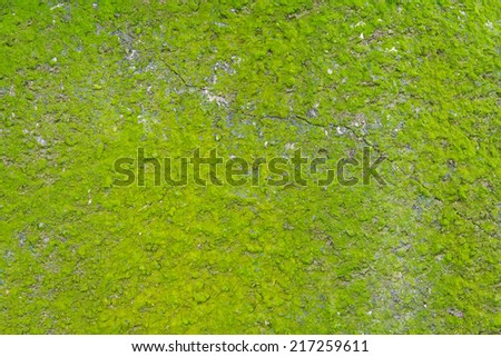 Beautiful Green Moss In The Forest, Background - stock photo