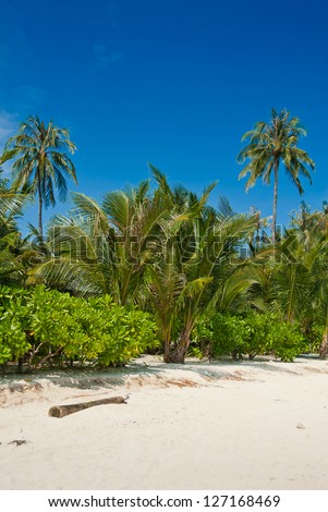 Beautiful green palm trees at tropical beach, Phi-Phi Island, Thailand - stock photo