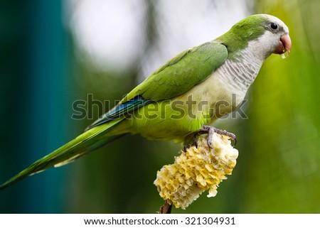 Beautiful green parrot bird - stock photo