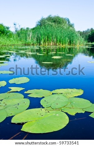 beautiful green plants on a water - stock photo