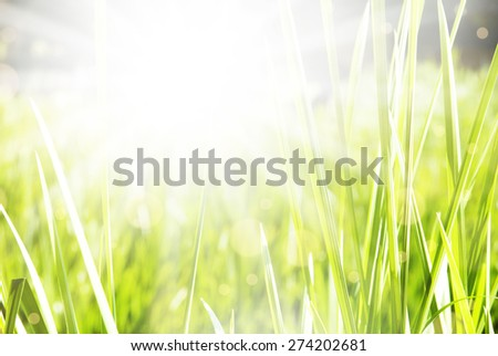 Beautiful green summer sunny background