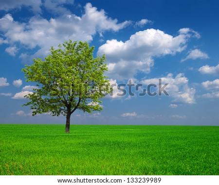 beautiful green tree among a fields - stock photo