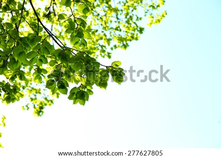Beautiful green twigs on blue sky background