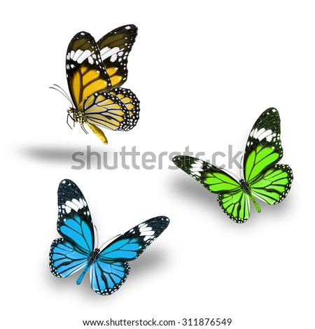 Beautiful Green Yellow Light Blue butterfly flying up
