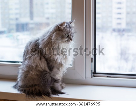 Beautiful grey cat sitting on windowsill and looking to window - stock photo