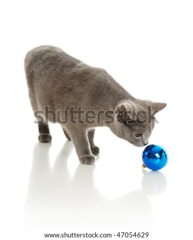 Beautiful grey cat with a fur-tree toy on a white background