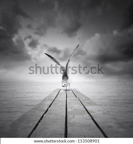 Beautiful gull with a wingspan resting on a pier at the beach with dramatic sky in black and white - stock photo