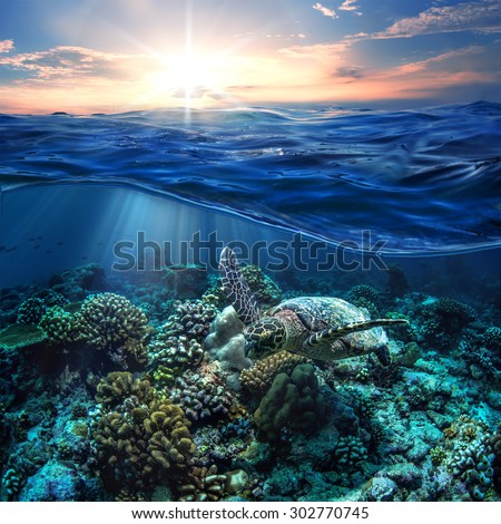 Ocean Fish Stock Photos, Images, & Pictures | Shutterstock