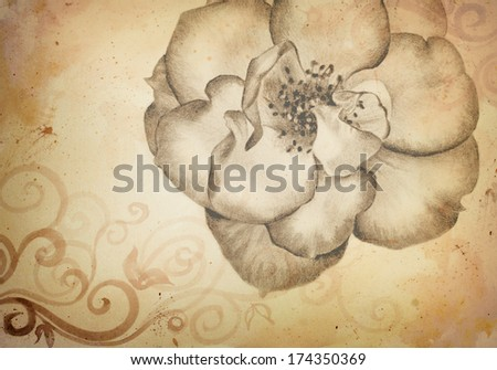 beautiful hand drawn wild rose pencil sketch in brown sepia color tone style for vintage retro look, rose drawing illustration for business cards brochures posters scrapbook art wedding invitations  - stock photo