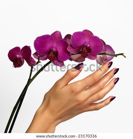 Beautiful hand touching orchid - stock photo