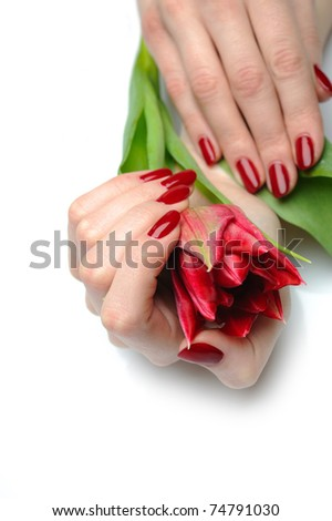 Beautiful hand with perfect nail red manicure and tulip. isolated on white background - stock photo