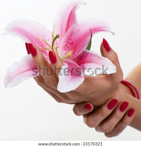 Beautiful hands holding lily - stock photo