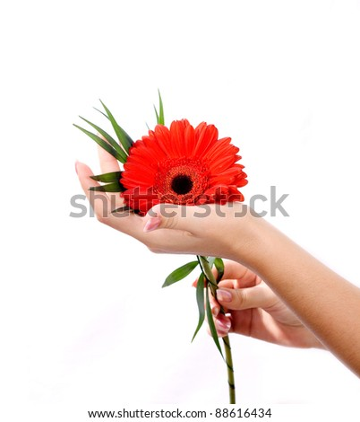 Beautiful hands with manicure and pink flower in reflection. - stock photo