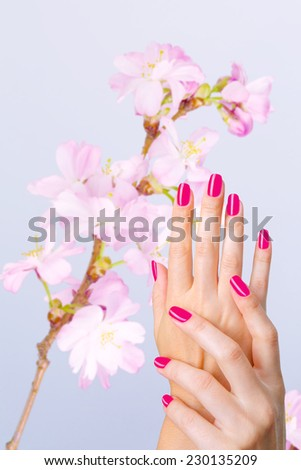Beautiful hands with pink manicure and blosoom cherry tree at background. Vertical, with copy space, consept of spring salon spa treatment  - stock photo