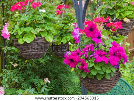 Beautiful hanging baskets with purple petunias. - stock photo