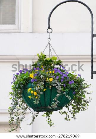 beautiful hanging flower box under sunlight - stock photo